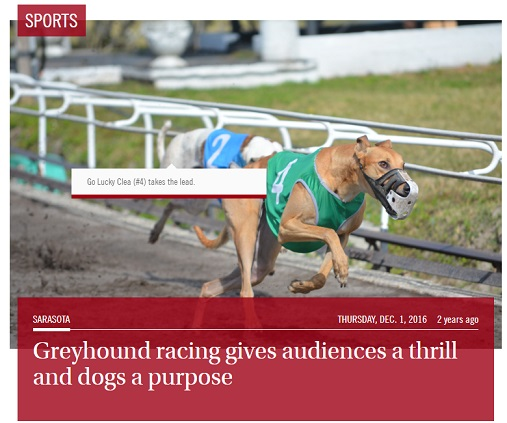 Greyhound racing gives audiences a thrill and dogs a purpose